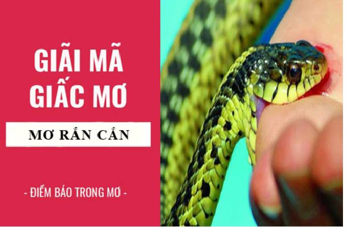 Giải mã giấc mơ thấy rắn cắn nên đánh số mấy?