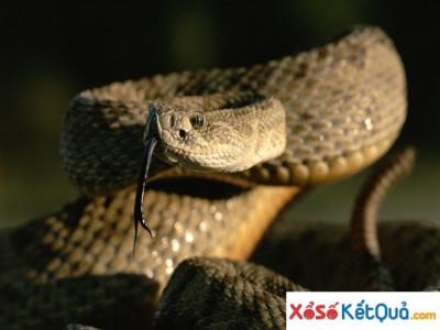 Nằm mơ thấy rắn cắn không xui xẻo như bạn nghĩ - Giải mã giấc mơ bị rắn cắn
